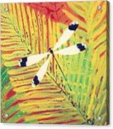 Fern Dragon Acrylic Print by Anna Skaradzinska