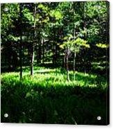 Fern Field Acrylic Print