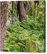 Fern Garden Acrylic Print