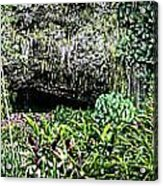 Fern Grotto Acrylic Print