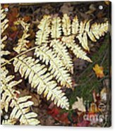 Fern In The Forest Acrylic Print