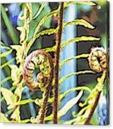 Fern Twirls Acrylic Print