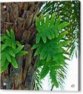 Ferns 1 Acrylic Print