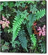 Ferns Along The Columbia River Acrylic Print