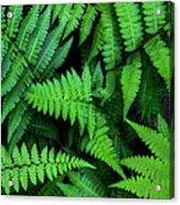 Ferns Along The River Acrylic Print