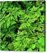 Ferns And Fauna Acrylic Print by T C Brown