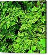 Ferns And Fauna Acrylic Print