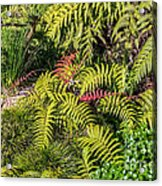 Ferns And More Acrylic Print