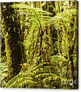 Ferns And Moss Acrylic Print