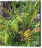 Ferns II Acrylic Print