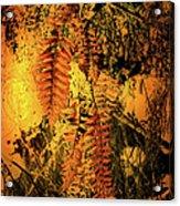 Ferns In Fall Acrylic Print