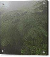 Ferns In Mist Acrylic Print