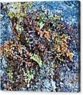Ferns On Cliffside Acrylic Print
