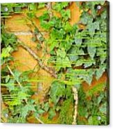 Ferns Vines And Lines 2am-112099 Acrylic Print