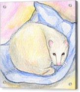 Ferret's Day Off Acrylic Print