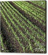 Fertile Farmland Acrylic Print