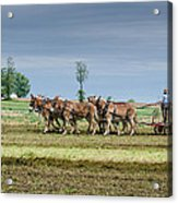 Fertilizing Acrylic Print