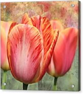 Festive Tulips Acrylic Print