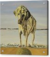 Fetch Acrylic Print