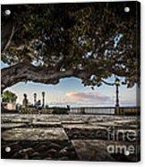Ficus Magnonioide In The Alameda De Apodaca Cadiz Spain Acrylic Print