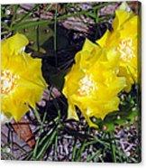 Field Cactus Acrylic Print