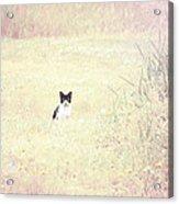 Field Cat Acrylic Print