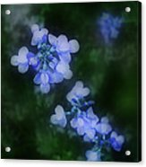Field In Blue Acrylic Print