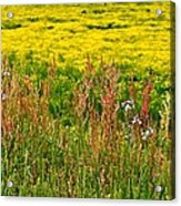 Field In Spring Acrylic Print by Beverly Hammond