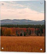 Field In Yellowstone Acrylic Print