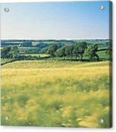 Field Near Barnstaple, North Devon Acrylic Print