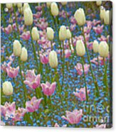 Field Of Blooms Acrylic Print by Sarah Crites