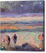 Field Of Crane Acrylic Print