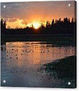 Field Of Ducks Acrylic Print