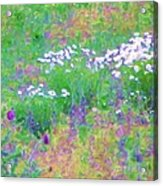 Field Of Flowers In Nature Acrylic Print