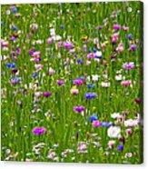 Field Of Flowers Acrylic Print by Leyla Ismet