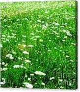 Field Of Flowers Acrylic Print