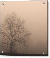 Field Of Fog Acrylic Print