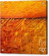 Field Of Gold Acrylic Print