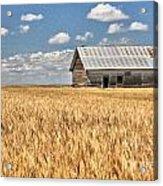 Field Of Grain Acrylic Print