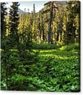 Field Of Green And Gold Acrylic Print