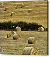 Field Of Hay Bales Acrylic Print