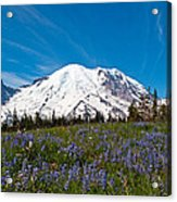 Field Of Lupines And Rainier Acrylic Print