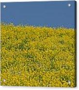 Field Of Mustard Acrylic Print