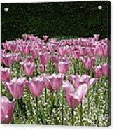 Field Of Pink Acrylic Print