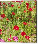 Field Of Poppies Digital Art Prints Acrylic Print