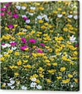 Field Of Pretty Flowers Acrylic Print