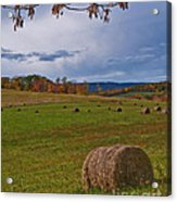 Field Of Round Bales Acrylic Print