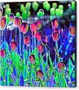 Field Of Tulips - Photopower 1496 Acrylic Print