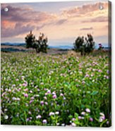 Field Of Wildflowers Acrylic Print