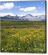 Field Of Yellow Acrylic Print